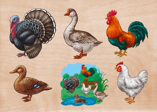 kyllingene med store pupper stripe