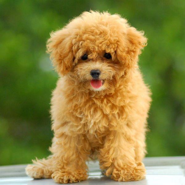 6 Rețete pentru câini obezi