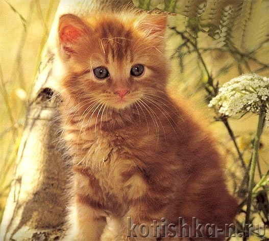 Lilu Adalah Nama Untuk Kucing Nama Tradisional Rusia Untuk Wanita Cat Dan Nama