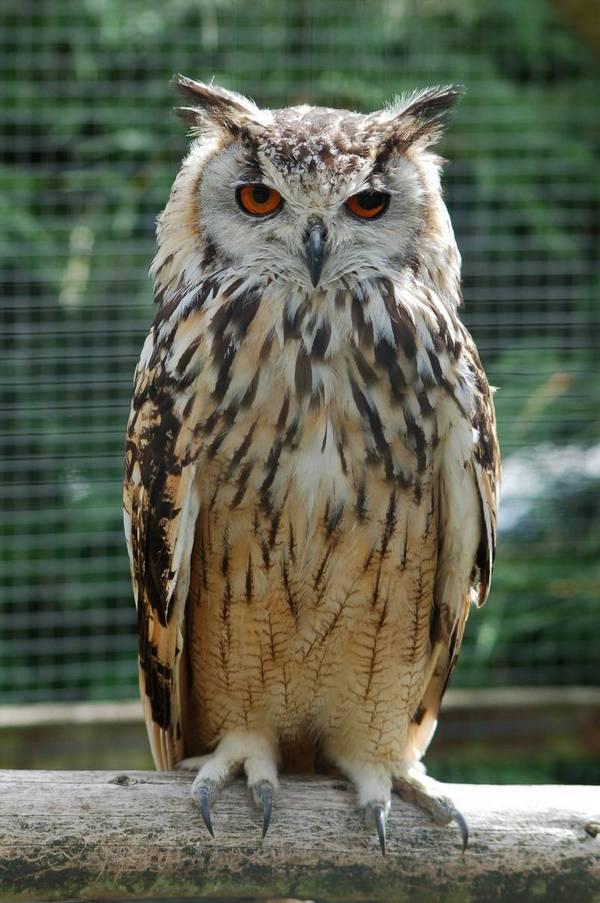 owl să fie descărcată în greutate pierzi în greutate face muay thai